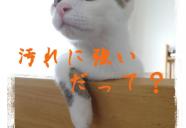 満室御礼!猫好きが集うアパート『まやちぐら』。大家の部屋で猫談義も