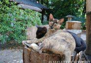 猫友と歩こう!−小森正孝のスマホで猫写真(1)