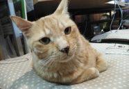 保護猫カフェ「ツキネコカフェ」レポート in 札幌(後編)