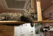 お気に入りの猫メンはどれ?『にゃんステ』できました!