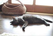 祝!世界猫の日−鬼奴さんとLLR伊藤さんのトークショーにYaikaおやつ?