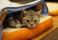 猫カフェで猫に好かれるには−膝乗り猫カフェCat tail