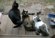 縁側ネコの代々のっ巻!!可愛いだけじゃニャーイ!のよ、縁側ネコはねっ