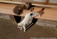 躍動感を撮ろう!−小森正孝のスマホで猫写真(4)