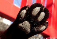 肉球は猫生(ニャンせい)の歴史!−小森正孝のスマホで猫写真(6)