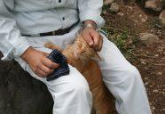 甲斐市役所農林振興課視察のっ巻!可愛いだけじゃニャーイ!のよ、縁側ネコはねっ