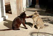 猫パンチが炸裂!にゃんこプロレスを撮るには−小森正孝のスマホで猫写真(5)