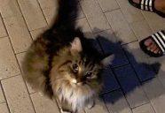 【実録】迷子猫がおうちに帰るまで