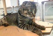 【法律相談6】拾った猫の所有権は?
