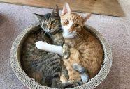 「みんなで楽しく猫だすけ!」にゃんぶまつり、大盛況!