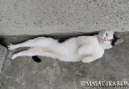 トリミングで印象を強くしよう!−小森正孝のスマホで猫写真(9)