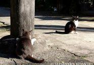 いい猫写真は構図が大事!−小森正孝のスマホで猫写真(7)