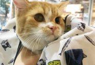 災害時に愛猫を守るには−猫のための防災講座