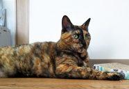 遠き虹2  サビ猫「好(すー)」の闘病記−猫共生賃貸feles