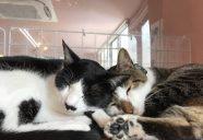保護猫がいっぱい!楽しいもりねこボランティア研修会