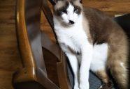 遠き虹3  サビ猫「好(すー)」の闘病記−猫共生賃貸feles