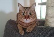 猫専用賃貸2棟目、大ピンチ。入居者が決まらない…!
