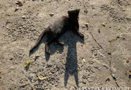光こそ写真の要!−小森正孝のスマホで猫写真(10)