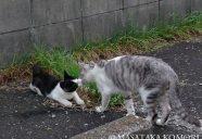 シャッター押す前にご挨拶!−小森正孝のスマホで猫写真(11)