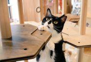 保護猫カフェで検証開始!−にゃんこタワー開発奮闘記 第九話