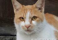 猫の撮影は地を這え!−小森正孝のスマホで猫写真(13)