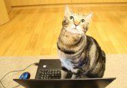 日本の猫の運動不足解消を目指せ!−にゃんこタワー開発奮闘記 第一話