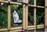 額の中の猫!−小森正孝のスマホで猫写真(12)