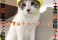 終わらない夏?−沖縄の猫アパート・まやちぐら