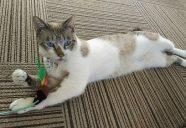 猫ちゃんのごはんのこと、知ってますか?市販キャットフードの分類