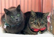 人気沸騰中!激ウマ人間用おやつ『にゃっつ』−保護猫カフェもりねこ