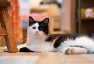 【法律相談7】排水管のつまりを「猫のせいだ」と言う大家