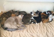 猫の飼育種1位はMIX−アニコム家庭どうぶつ白書2018