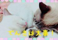台風24号で停電。入居者の食料を守れ!-沖縄の猫アパート・まやちぐら