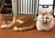みんな違ってみんな特別!入居猫の個性が光るプロフィール