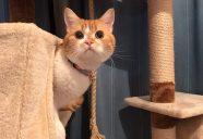 「気血水」を整えて、元気で美しい猫ちゃんに−猫と漢方(2)
