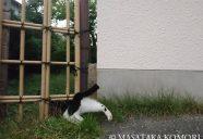 頭隠して尻隠さず!−小森正孝のスマホで猫写真(16)