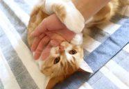 猫ちゃんが寒がりになった時−「気血水」の見立て方(上)
