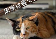 3月開催! 首都圏近郊の「猫里親会」情報