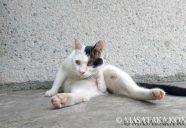 春の猫撮は低姿勢がコツ!−小森正孝のスマホで猫写真(17)