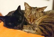 完全室内飼いこそ猫に快適!−月刊 猫部屋をつくる #01