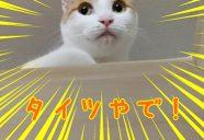 「猫預かりシステム」で長期留守も安心!-沖縄の猫アパート・まやちぐら
