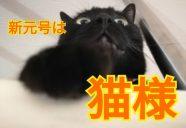 令和元年、建築単価高騰に脅かされる保護猫旅館計画…!なんくるないさ〜
