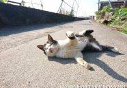 猫のリラックスモードを写そう!−小森正孝のスマホで猫写真(19)