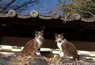 屋根の上にも猫はいる!−小森正孝のスマホで猫写真(20)