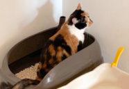 猫のトイレはとっても大事!−月刊 猫部屋をつくる #03