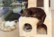 6月オープン!新・神奈川県動物愛護センター内覧会レポート−猫と暮らし、猫を創る。