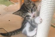 猫の爪とぎ対策はどうすれば良い?−月刊 猫部屋をつくる #04
