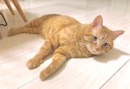 猫にじくじくの湿疹ができた時 −「気血水」の見立て方(下)