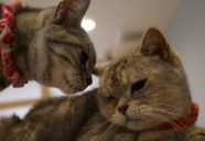 猫カフェの経営目的と動物愛護に関する倫理観
