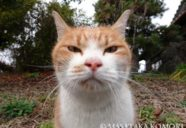センターを狙う!−小森正孝のスマホで猫写真(21)
